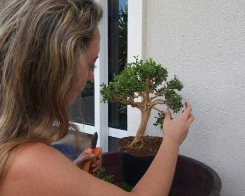 bonsai7